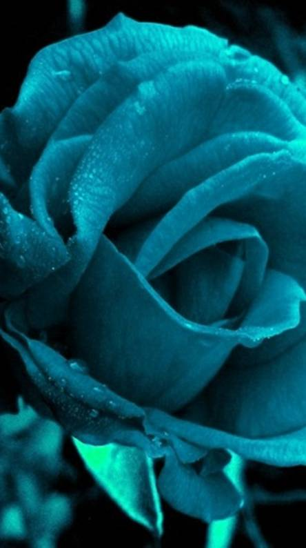 Blue Flower Wallpapers Free By Zedge