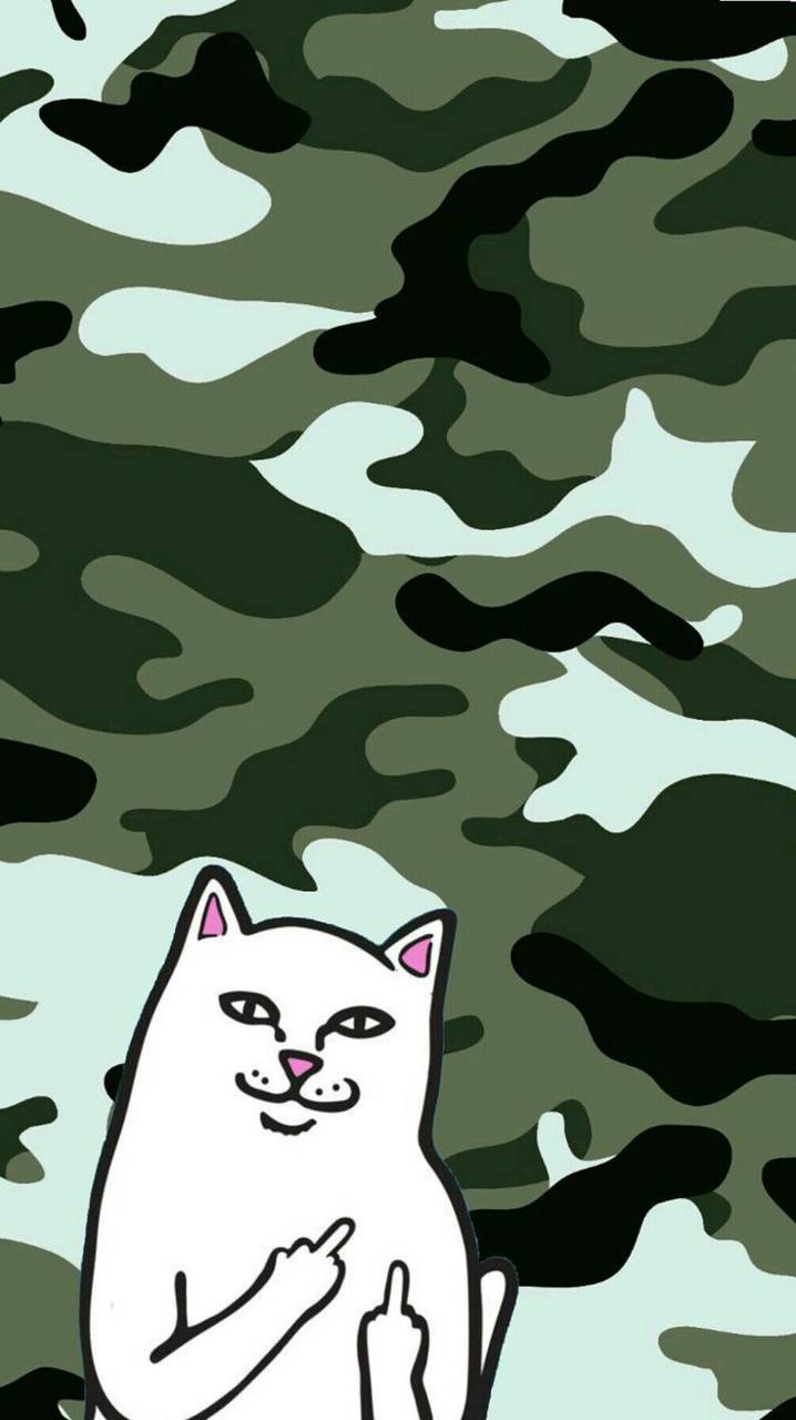 Ripndip Cat