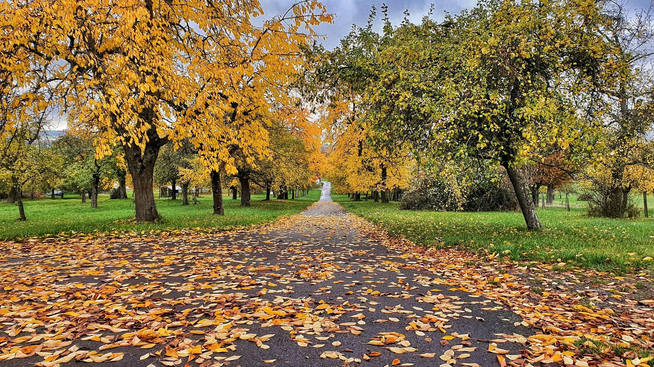 Herbst in Wetterau
