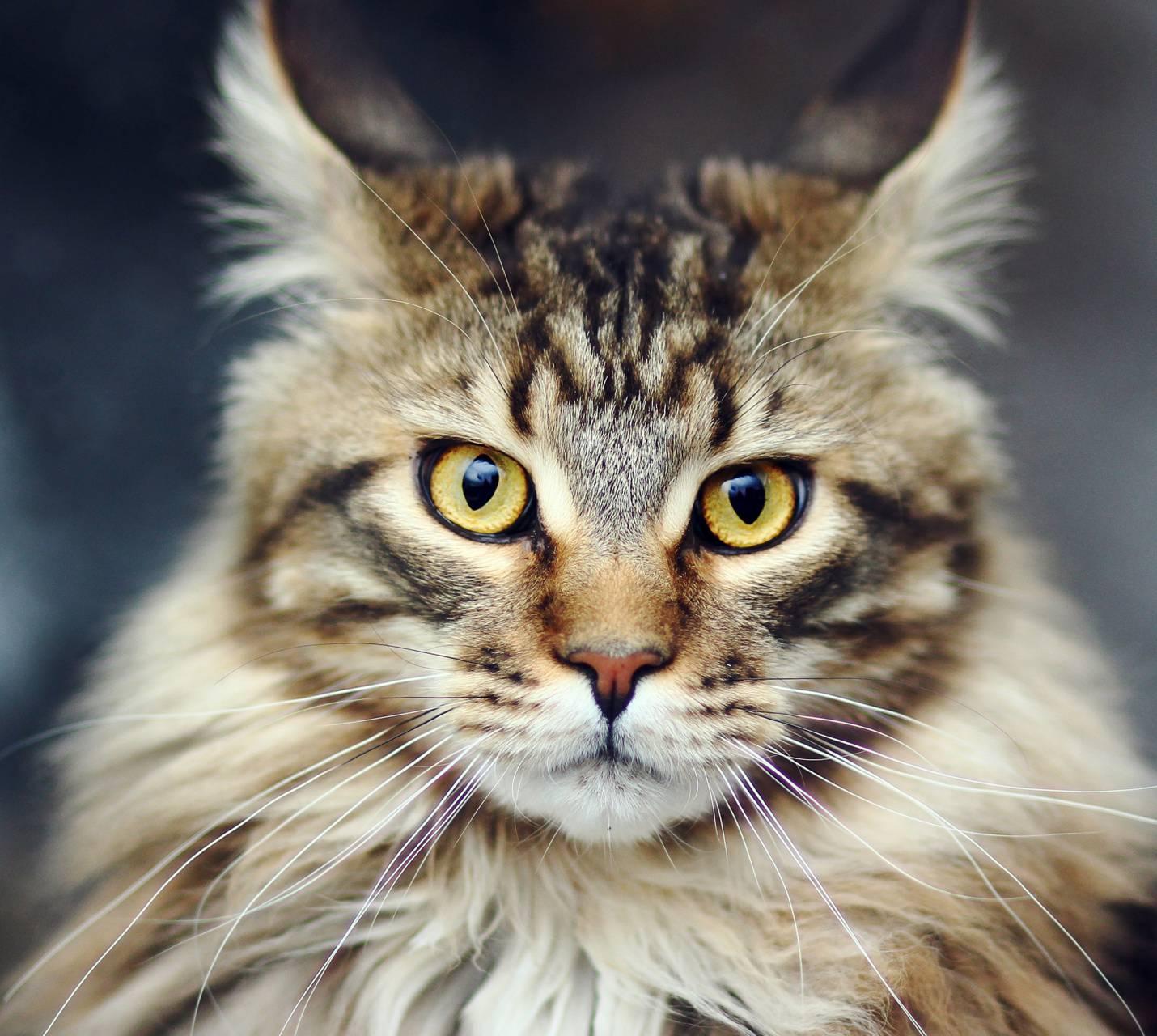 Furry Kitty