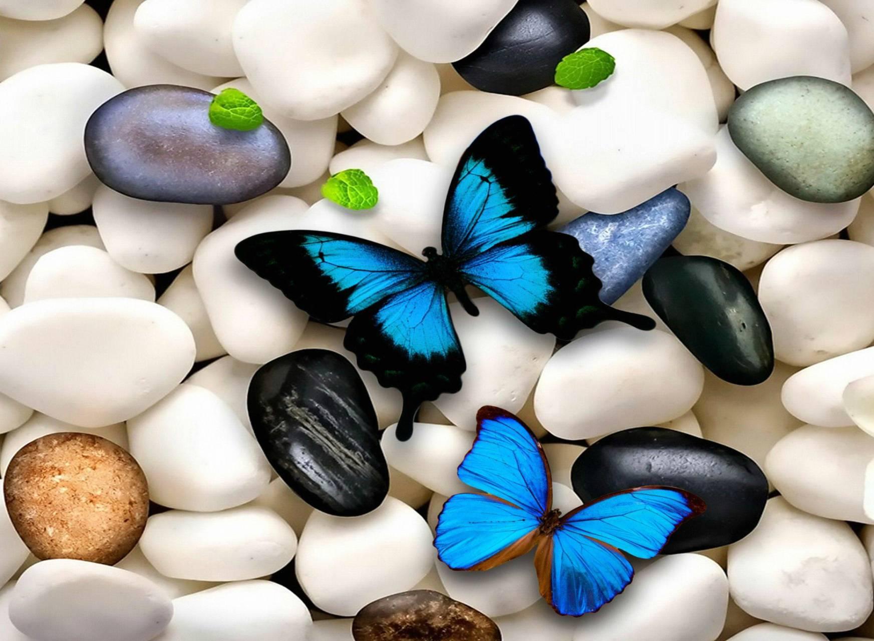 hd blue butterfly