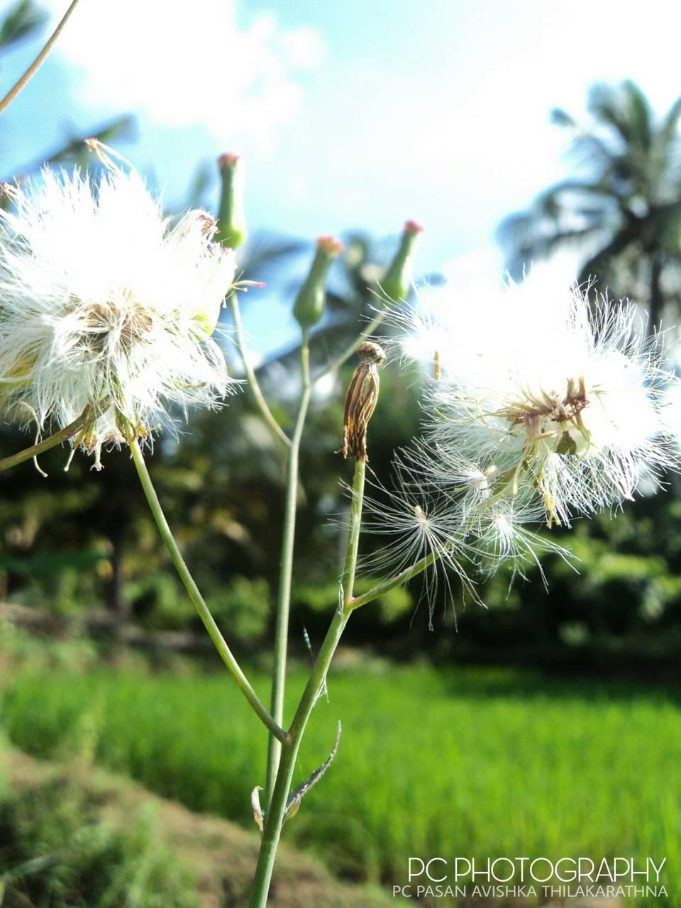 Pc mpnarakudumbiya