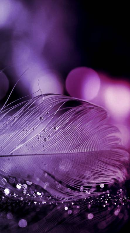 Sparkling Feather