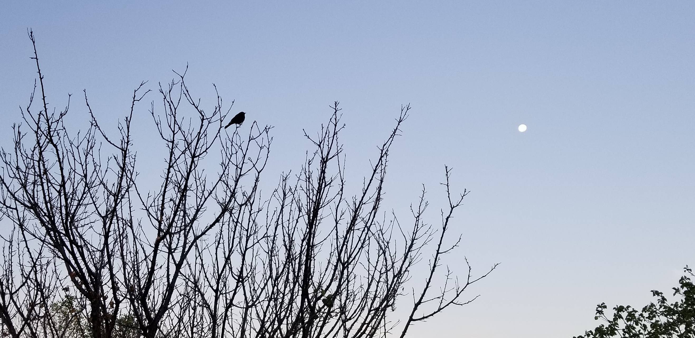 Early morning bird