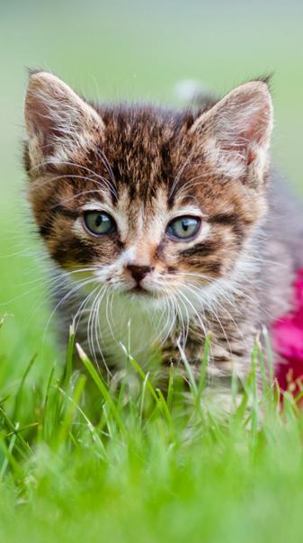 cute and cutty