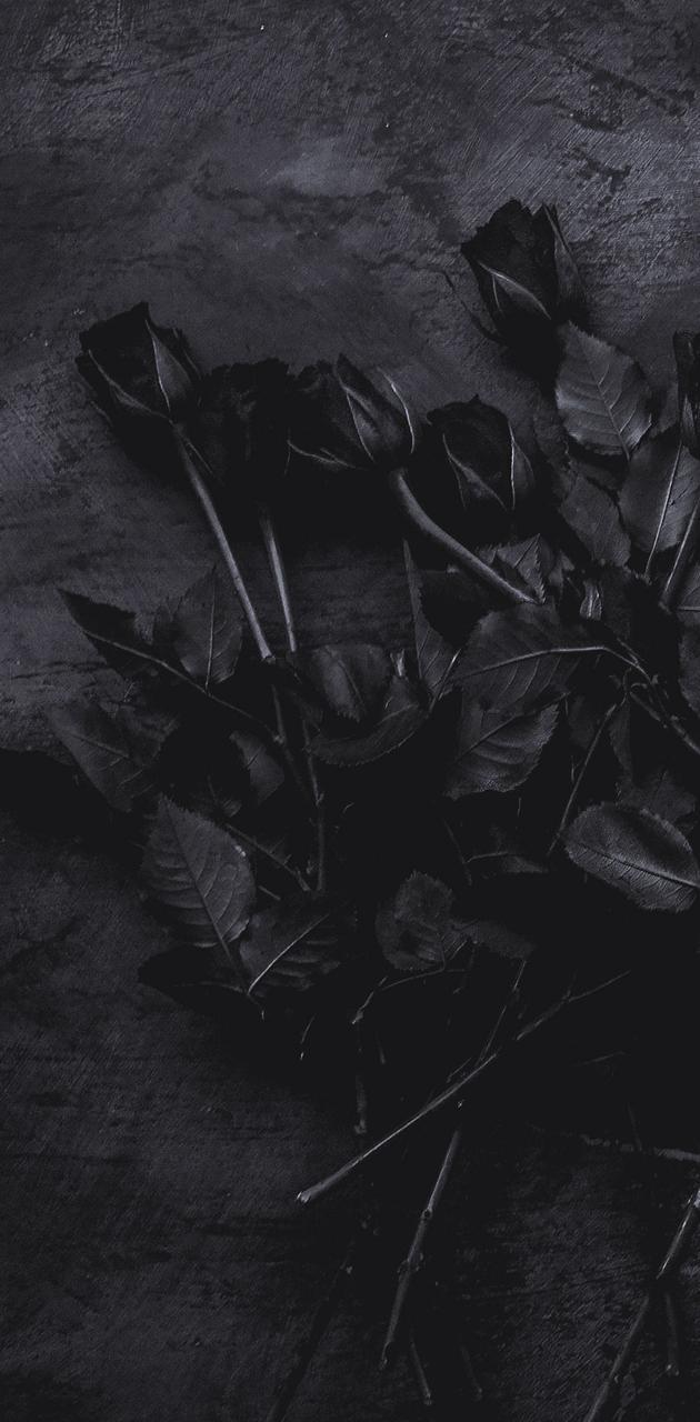 BlackParis