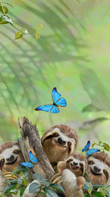 Sloth Wallpapers Free By Zedge