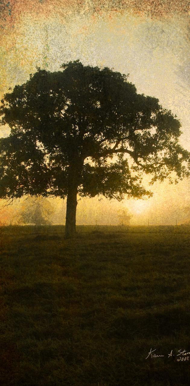 BSI Pasture Tree