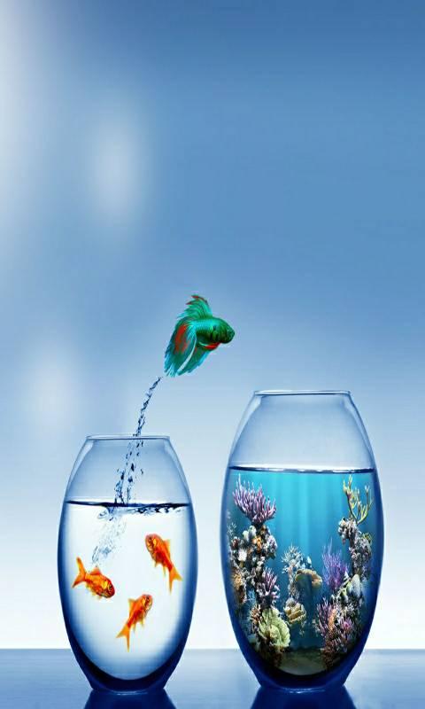 Fish 3d image