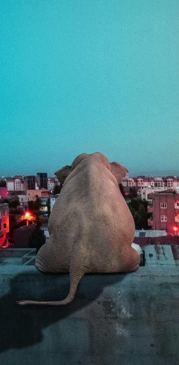 alone elephant