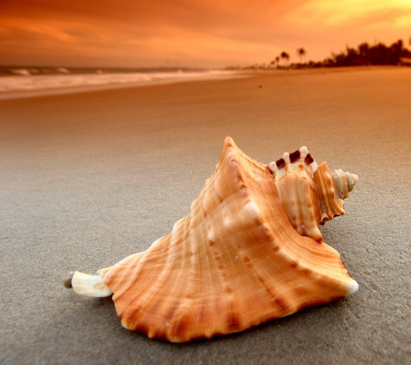 Beach-sea Shell