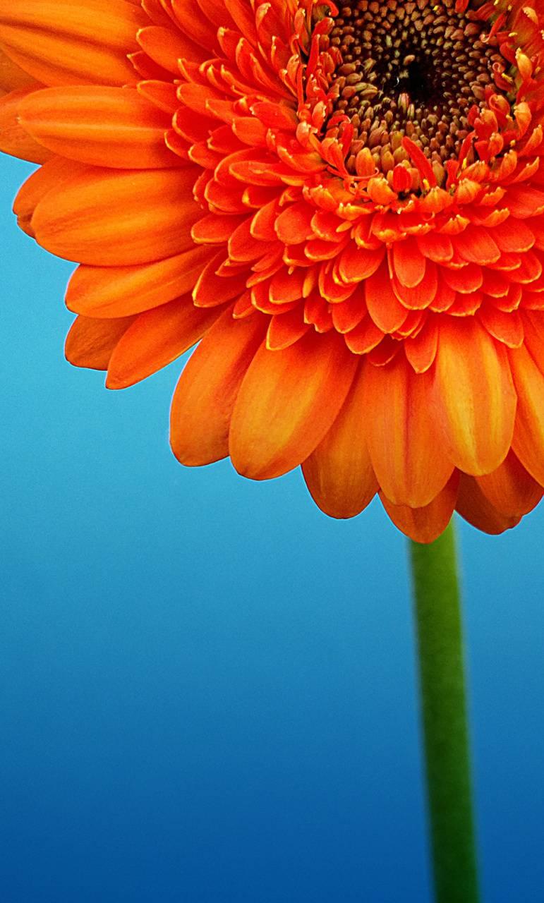 Beautiful flower HD