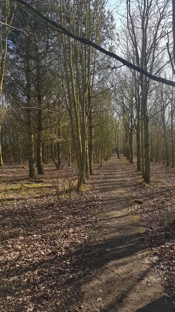 4k woods