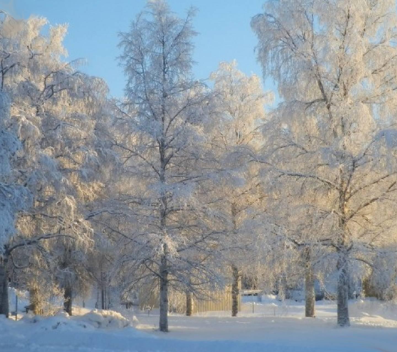 Cold Winter 5