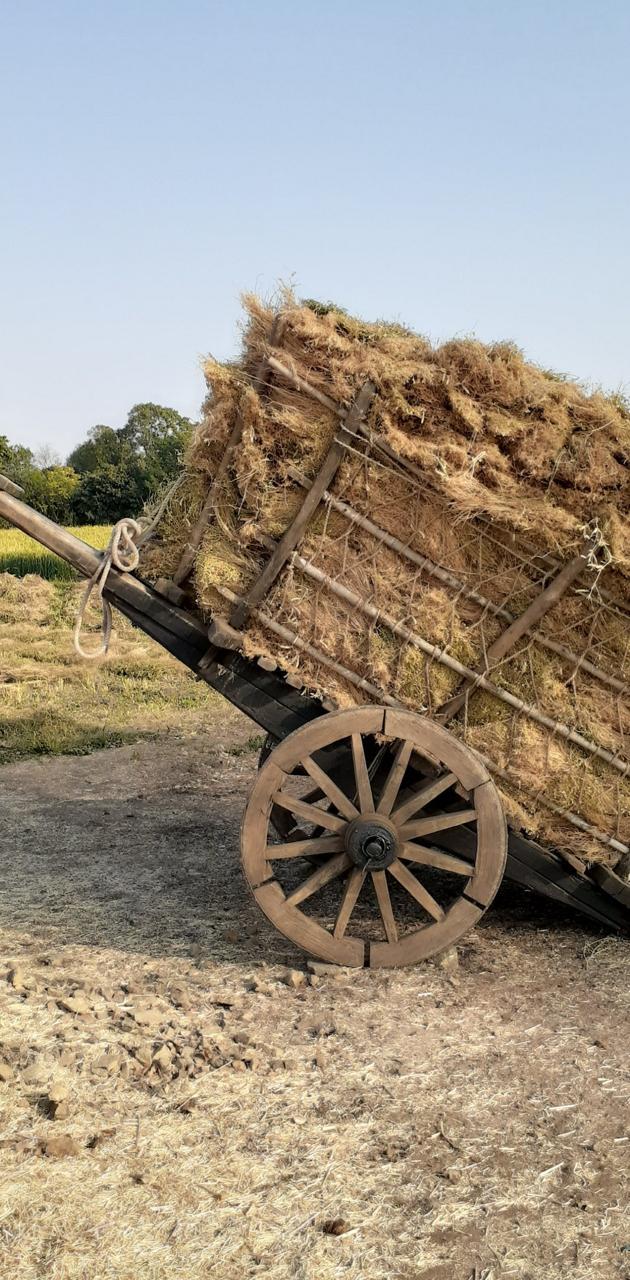 Old bullock cart