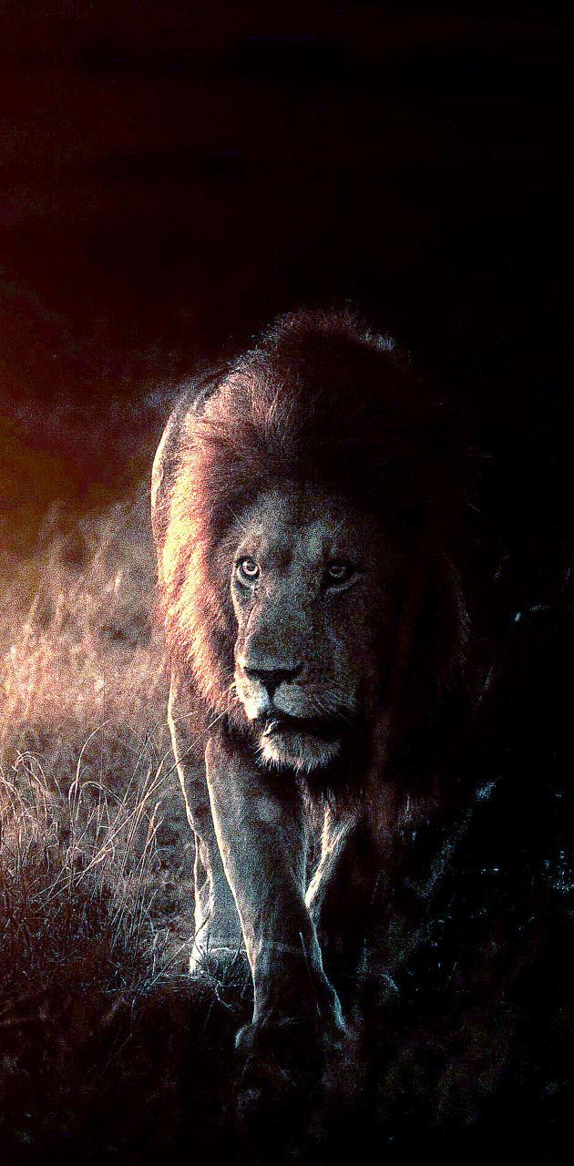 O rei dos animais
