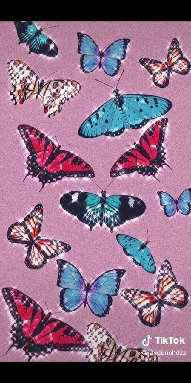 Aesthetic Butterfly Wallpaper Iphone 11