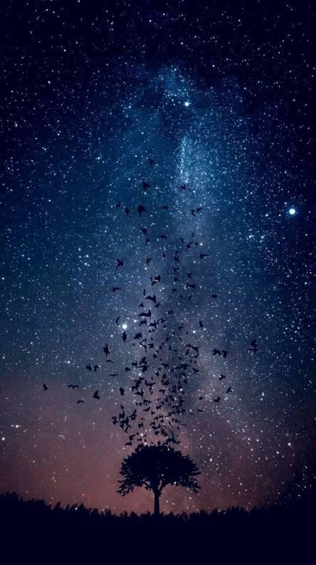 Download Wallpaper Night Sky Hd Cikimmcom