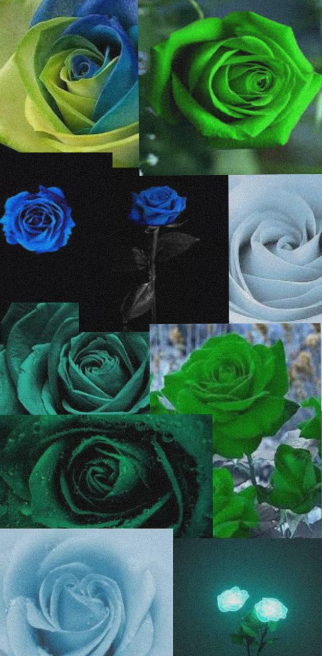 Blue and Green Rose