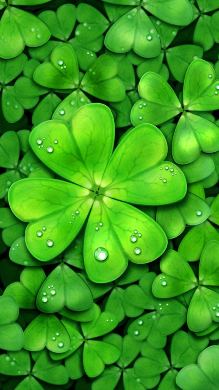 Four Leaf Clover Wallpaper By Black0rwhite 36 Free On Zedge