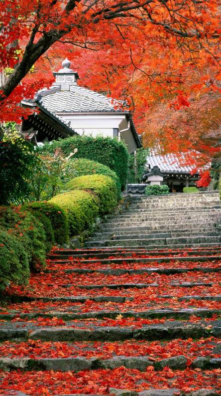 garden - Japanese Garden Wallpaper
