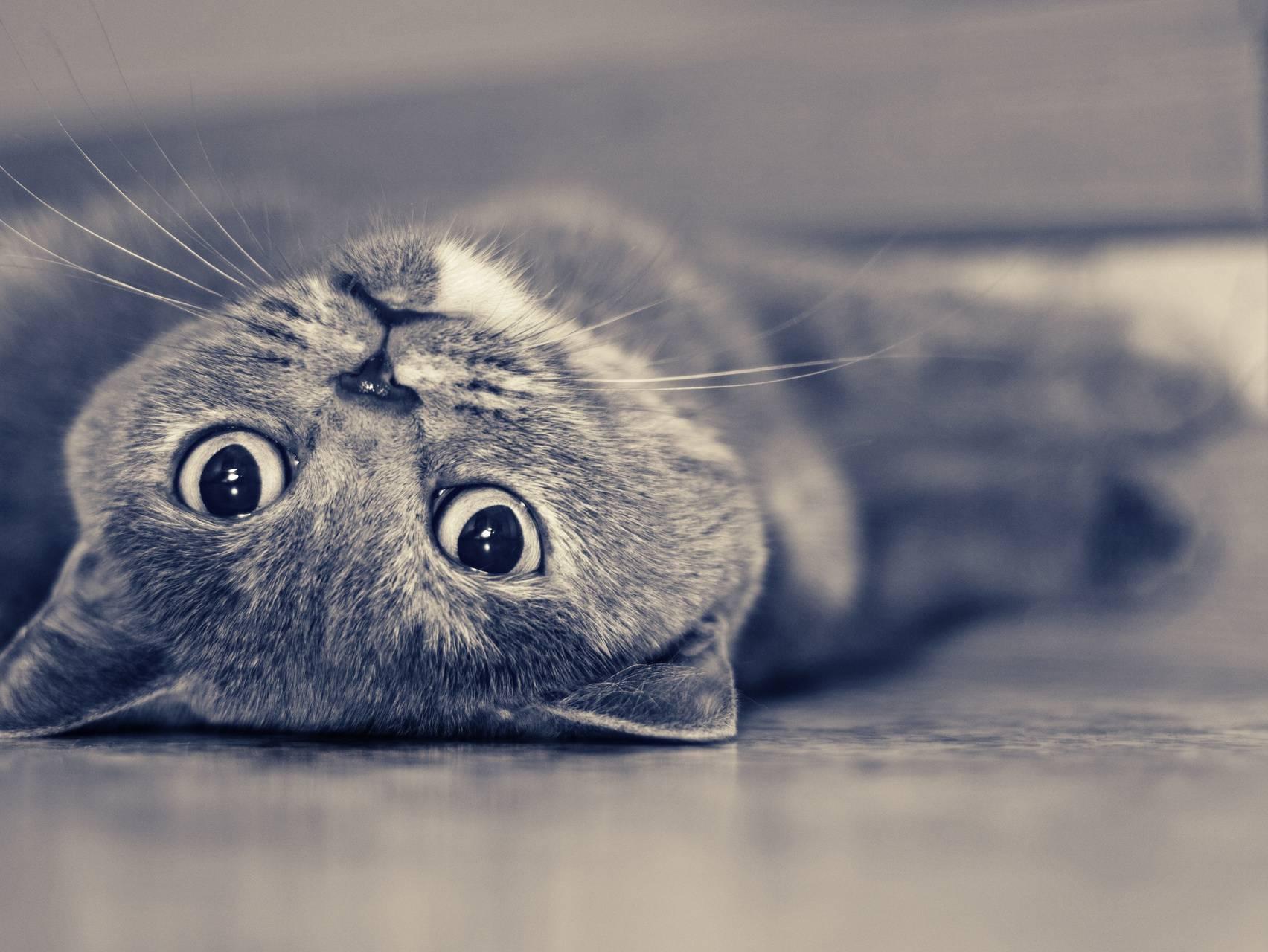 Cat On The Floor