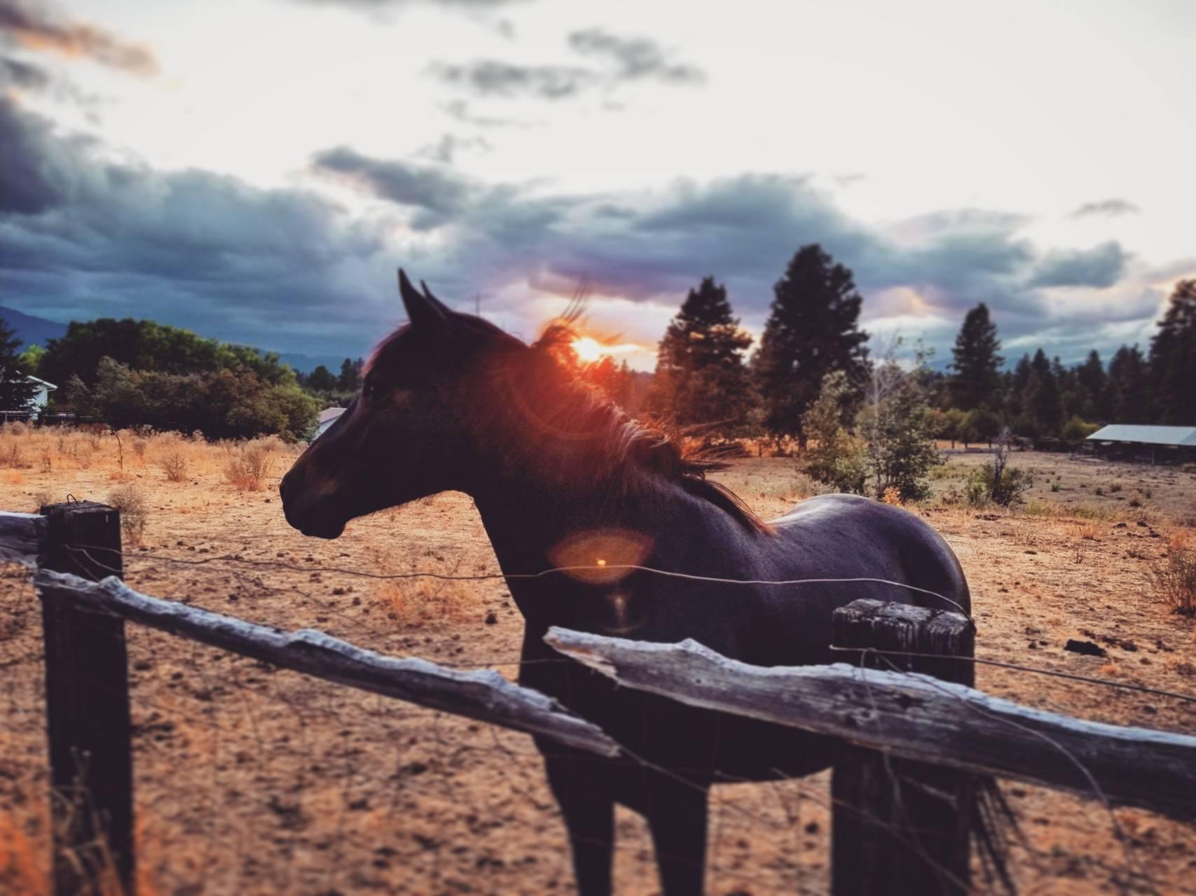 Sunset Horse II