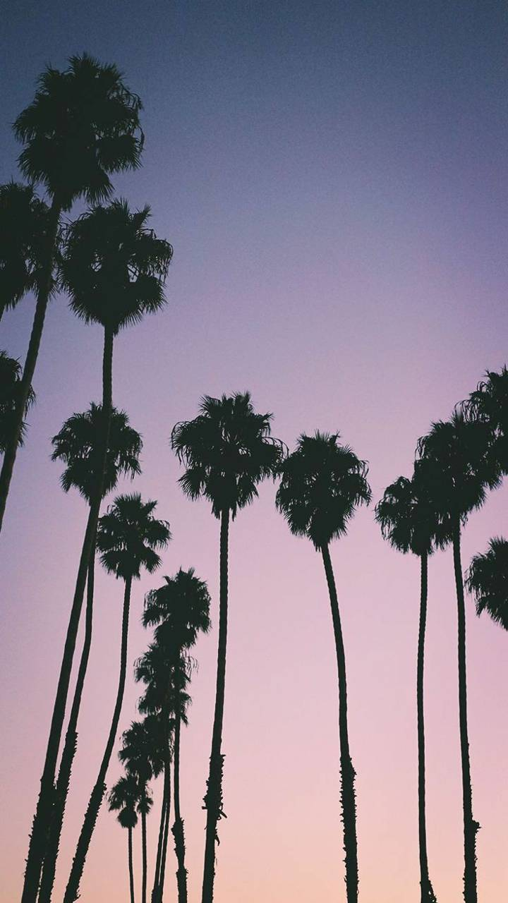 Palm Trees Wallpaper By Biscuittm D4 Free On Zedge