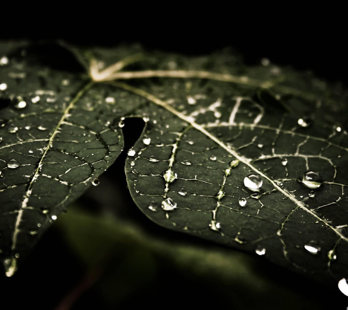 Leafy Droplets