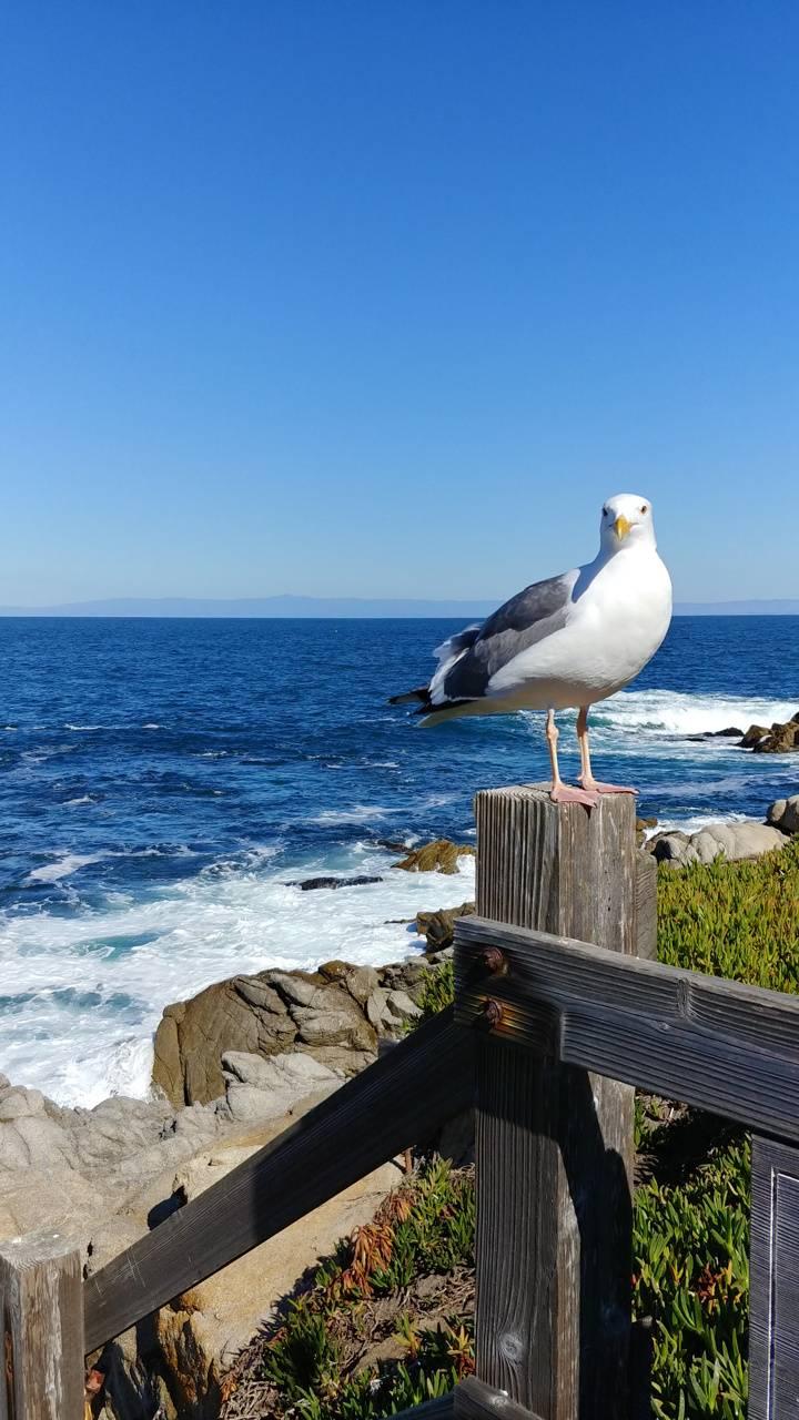 Ocean bird