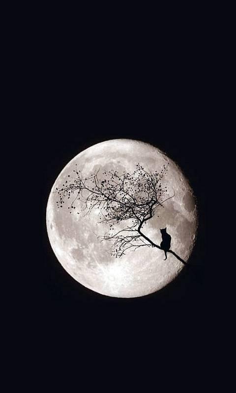 Full Moon Black Cat