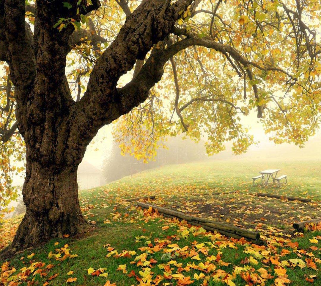 Tree Fog Autumn