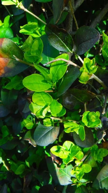 Spring green plants