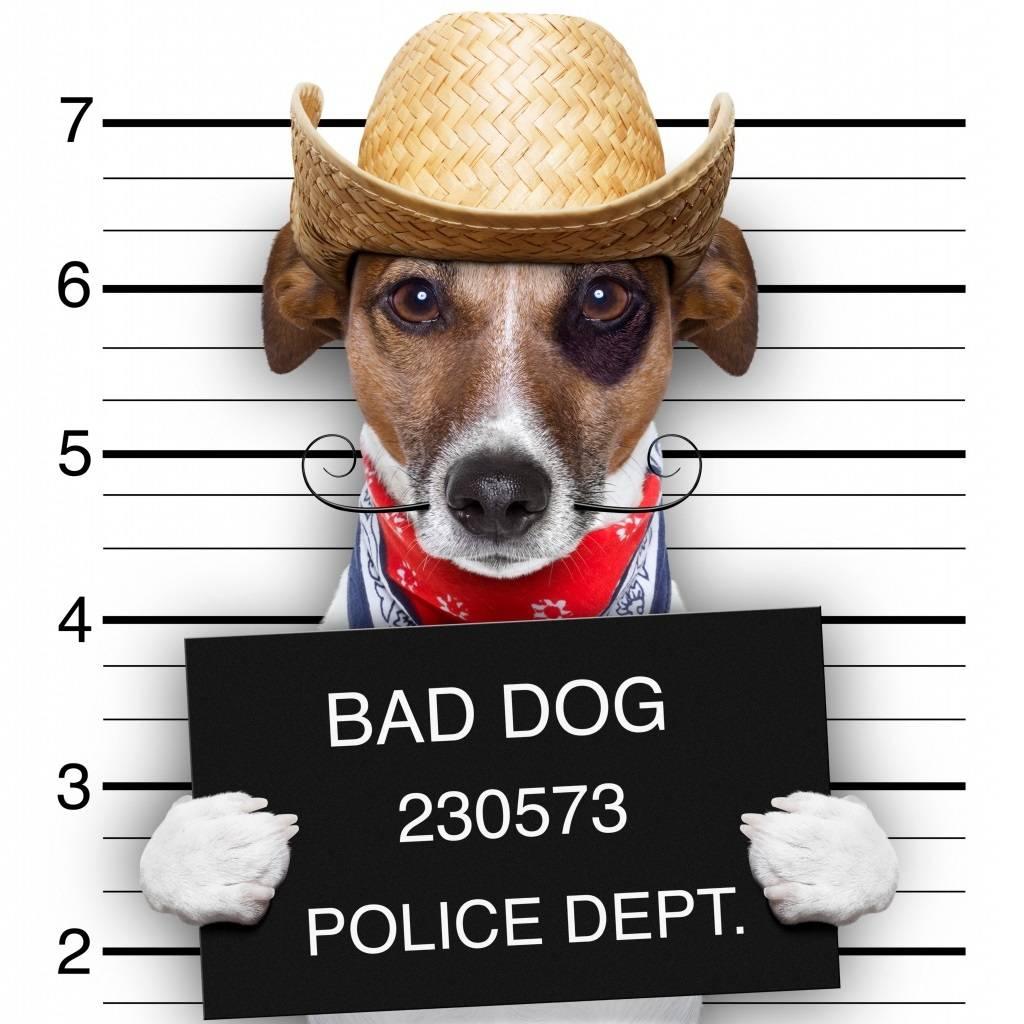 Плохая собака картинки