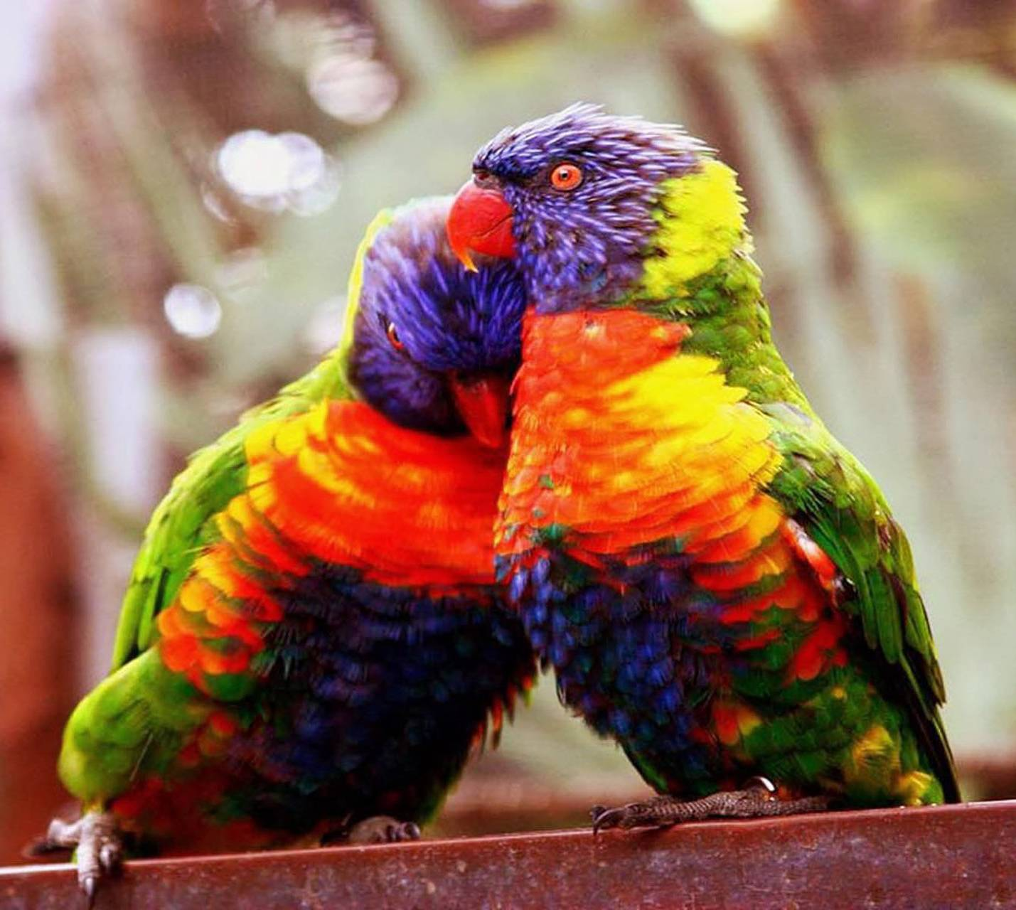 Love Birds wallpaper by Lord_Of_Angels ...