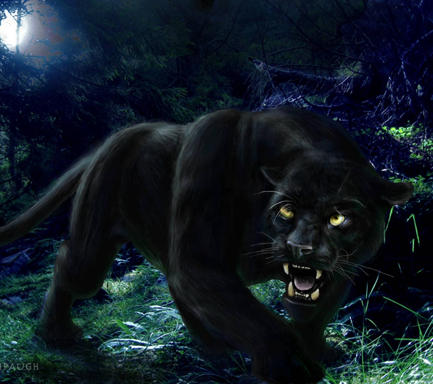 Night Of The Panther