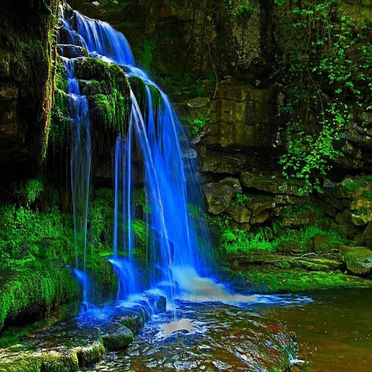 Deep in Rainforest