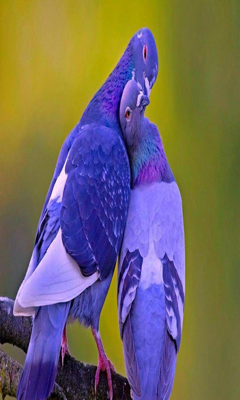 Love bird kissing