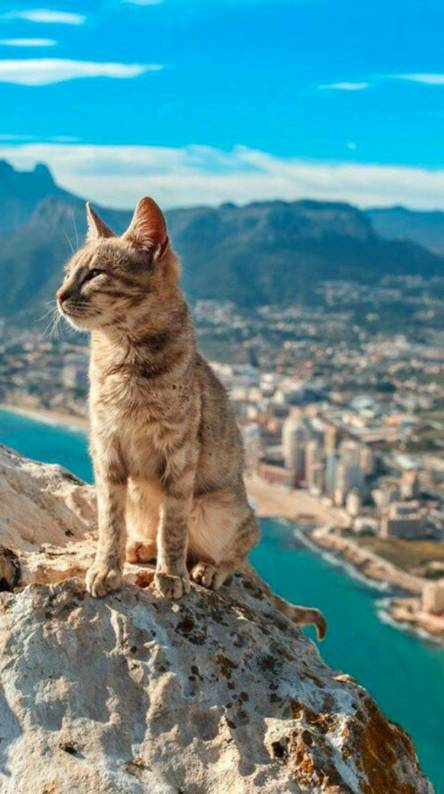 Cats likes to travel