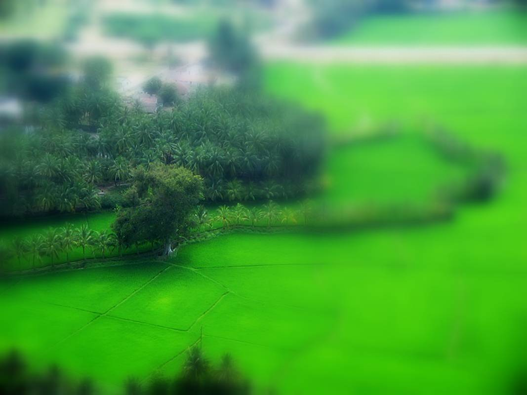 Focus Green Land
