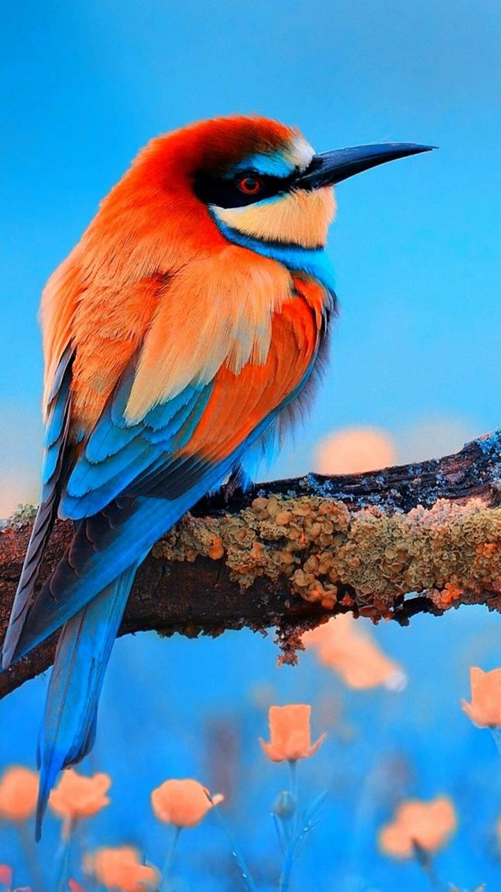 Bird Colors