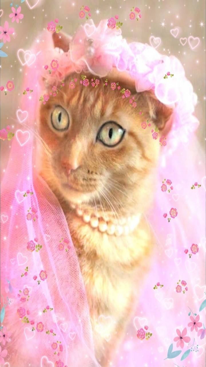 Cute cat bride