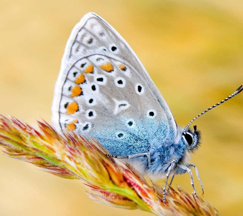 Cute Bufly Wallpaper By Krishnasakhi A0 Free On Zedge