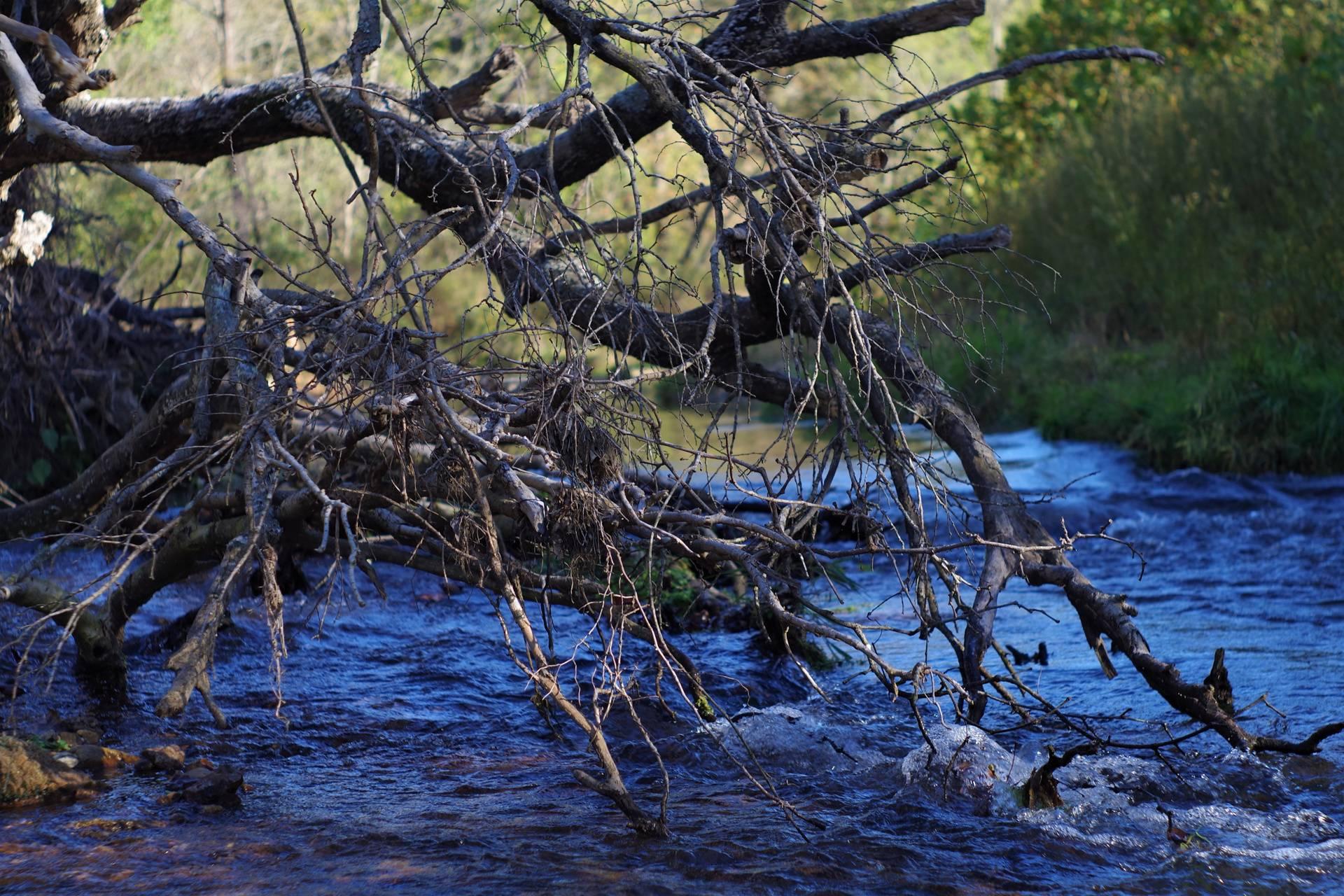 River Brush