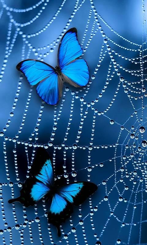 Butterflies On Web