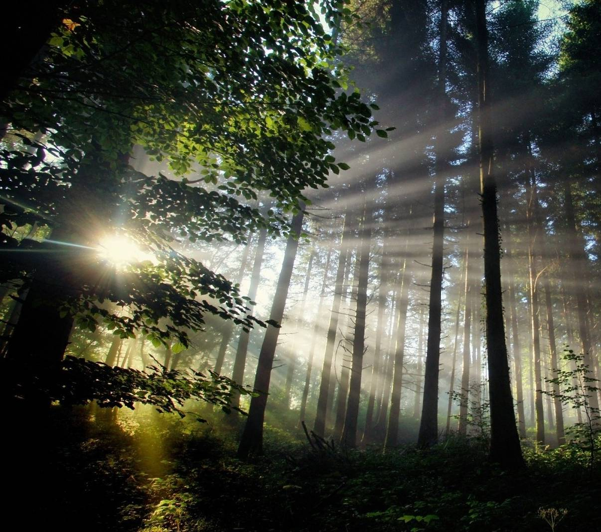 shine in forest
