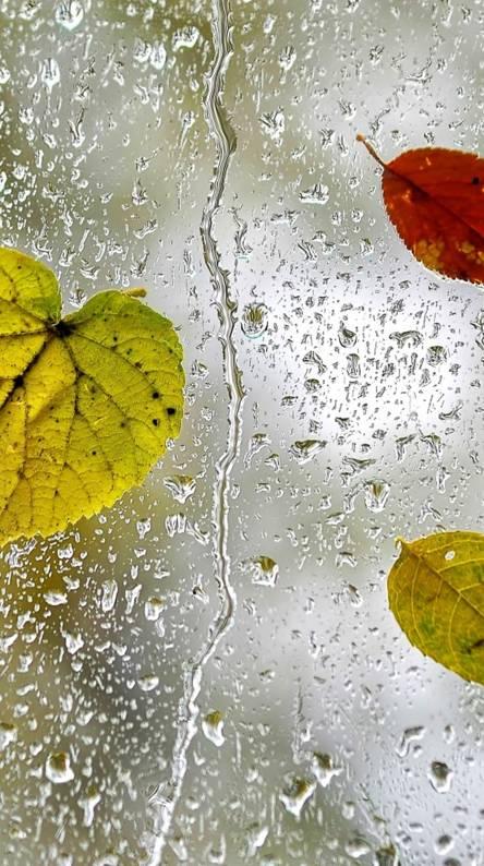 Drops Leaf