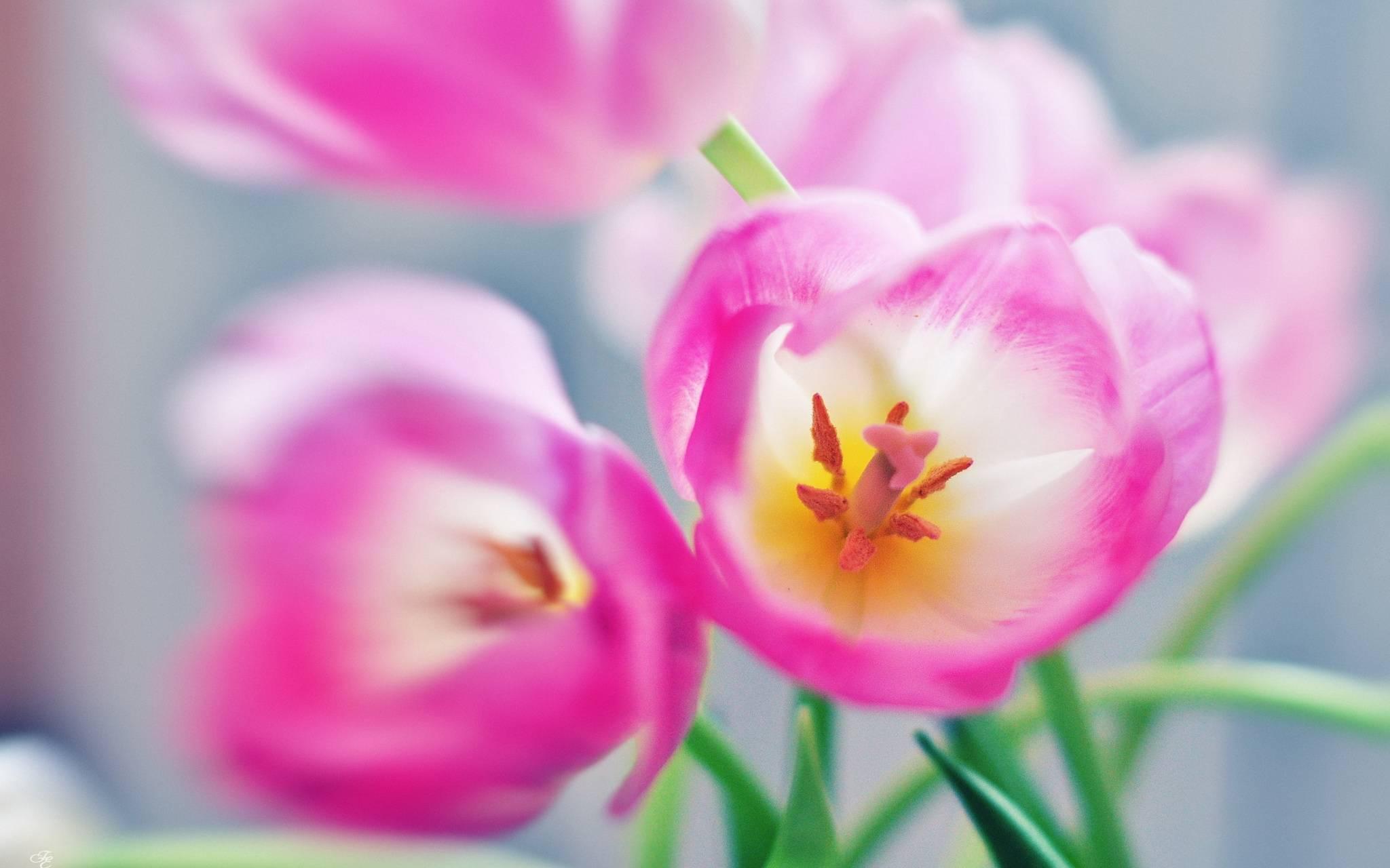 flowers lovely