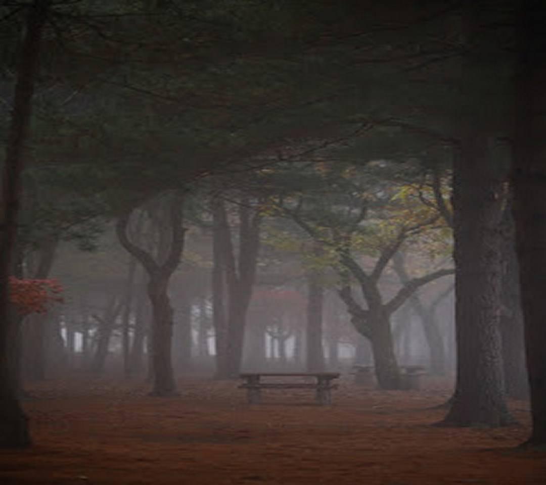 Misty Forrest