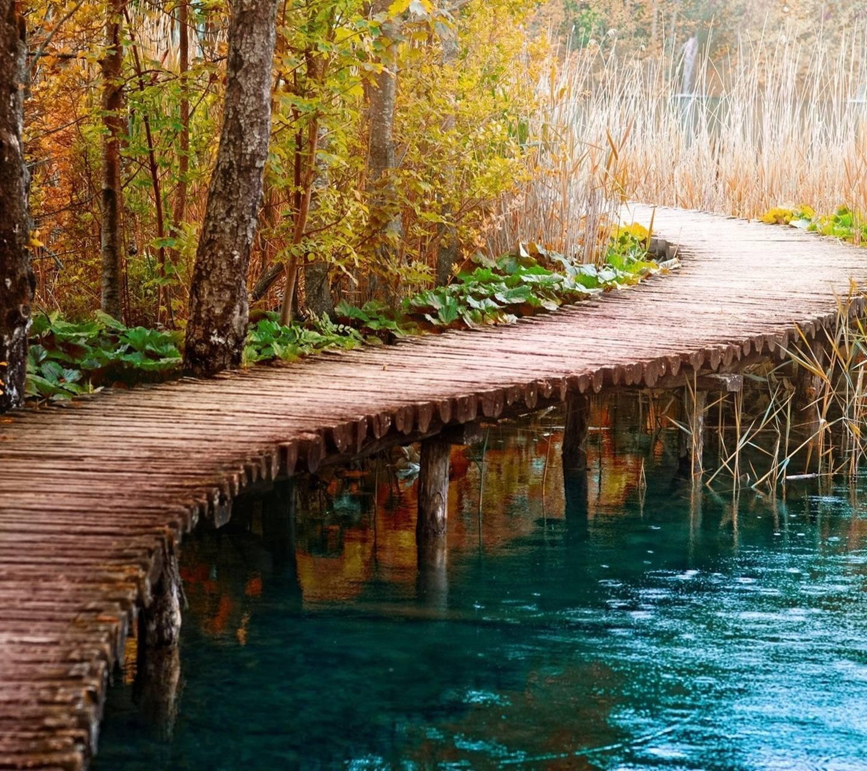 Natue Path Hd